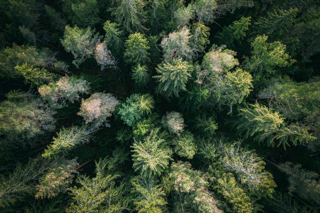 Preocupação ambiental: um dos nossos valores essenciais desde a década de 1970